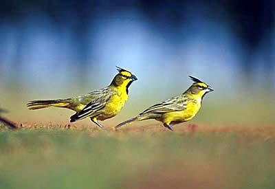 Curso: Aves para los que no tienen ni idea